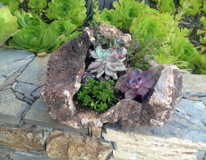 Lava pot rock planter with succulents on rock wall ledge