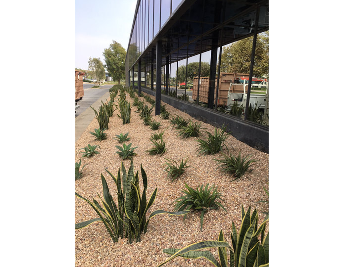 Parchment landscape pebble installed with plants on side of commercial building