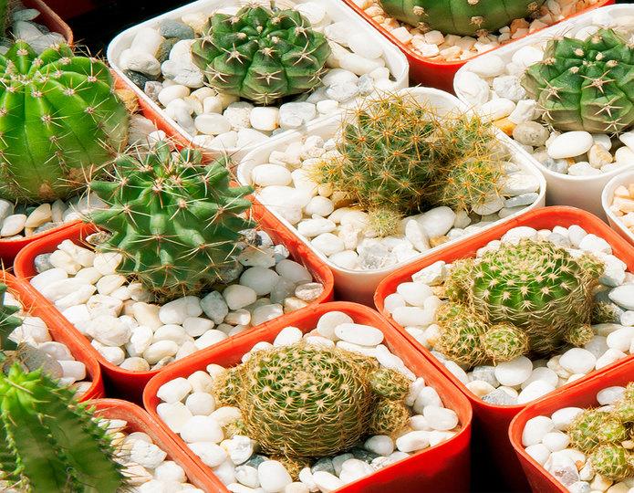 Porcelain landscape pebble in planters with succulents