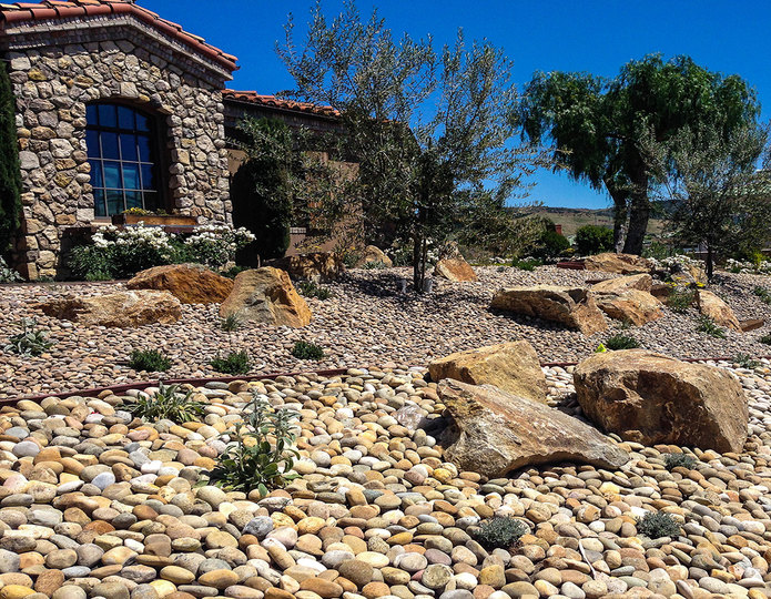 Buff Mexican Beach Pebble landscape cobblestone pebble installed around a boulder in backyard
