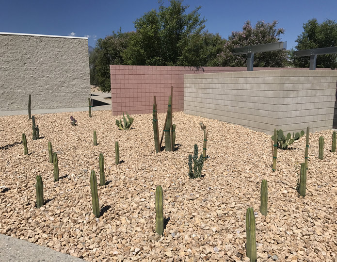 California Gold crushed stone rock with cacti in front yard