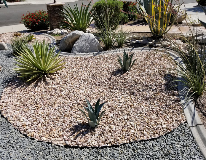 Gambler's gold installed in front yard landscaping project