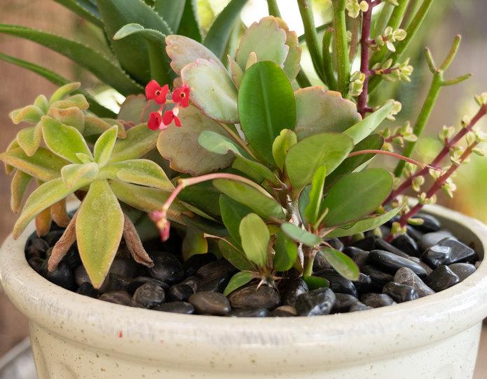 Black Polished decorative pebble inside indoor planter